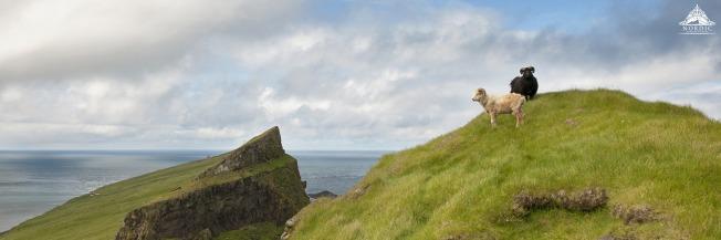 Faroe Islands Weddings